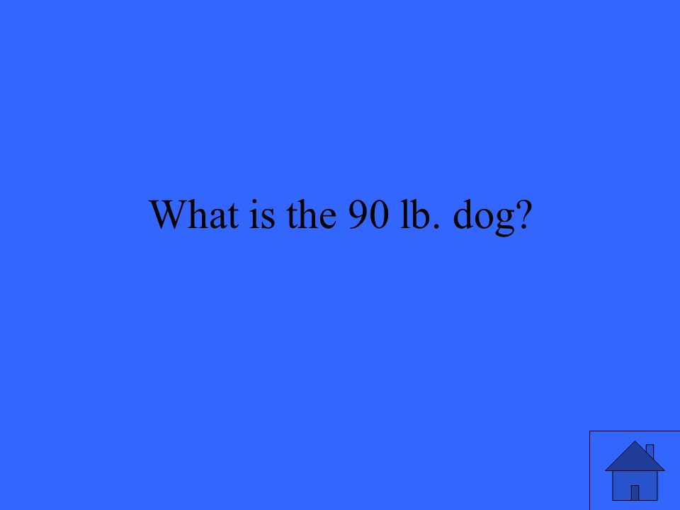 What is the 90 lb. dog