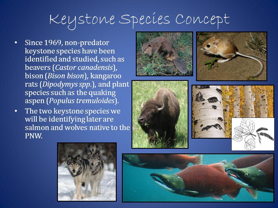Keystone species | Coursework Help beessaylqtk.webv.us