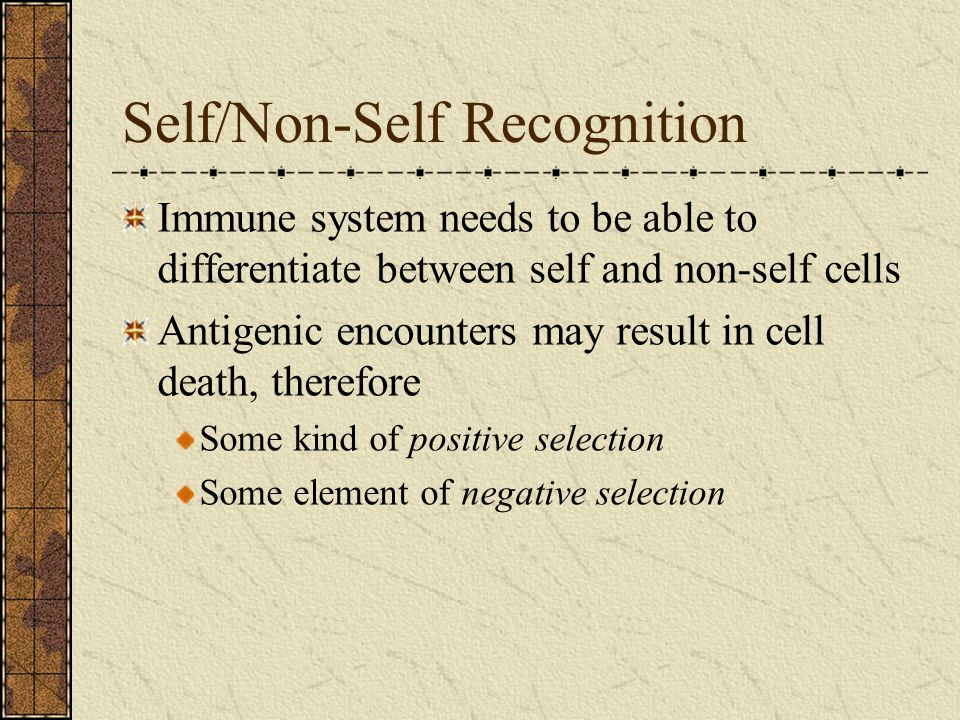 Self/Non-Self Recognition Immune system needs to be able to differentiate between self and non-self cells Antigenic encounters may result in cell death, therefore Some kind of positive selection Some element of negative selection