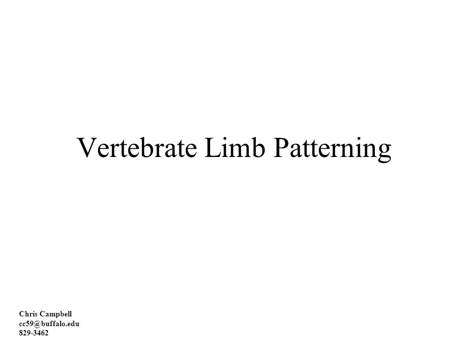 Vertebrate Limb Patterning Chris Campbell