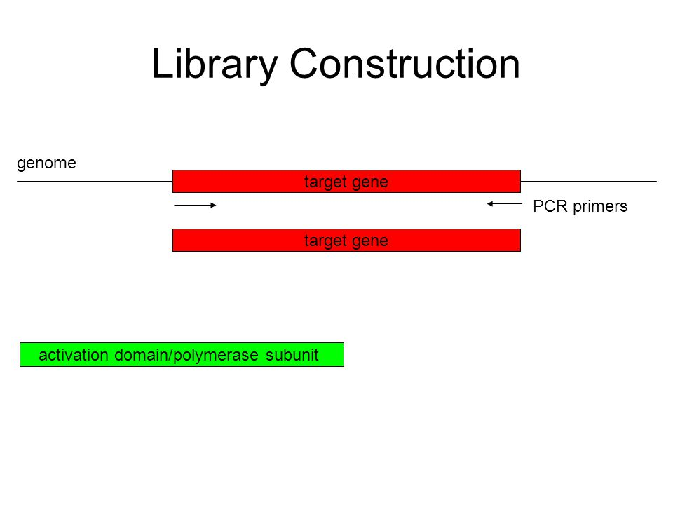 Library Construction target gene genome PCR primers activation domain/polymerase subunit target gene