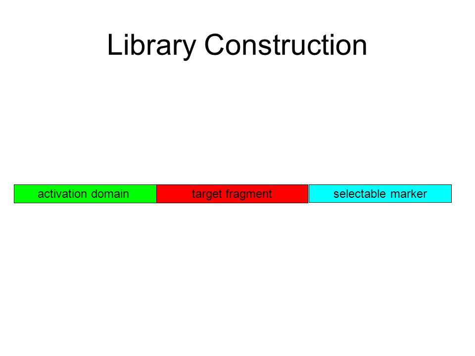 Library Construction target fragment selectable marker activation domain