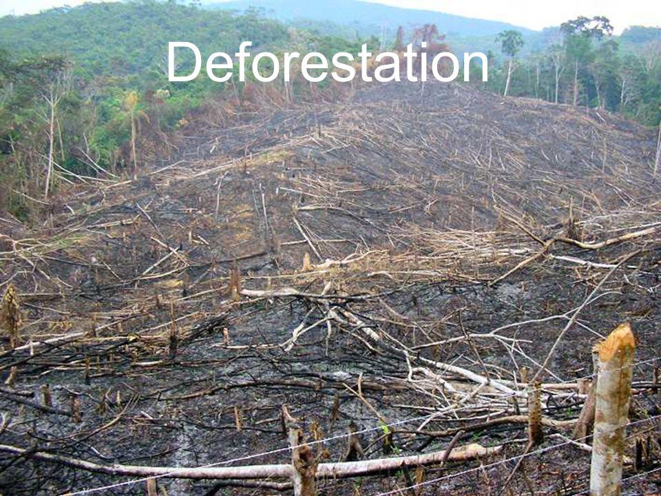Deforestation In Tropical Rainforests