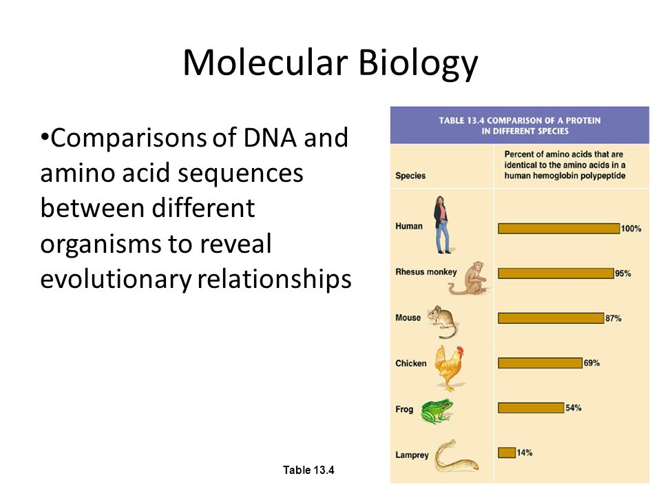 Molecular Biology Comparisons of DNA and amino acid sequences between different organisms to reveal evolutionary relationships Table 13.4