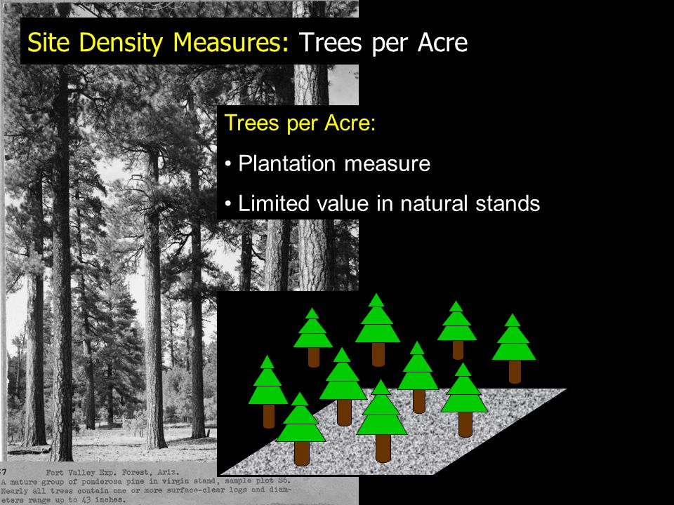 Site Density Measures: Trees per Acre Trees per Acre: Plantation measure Limited value in natural stands
