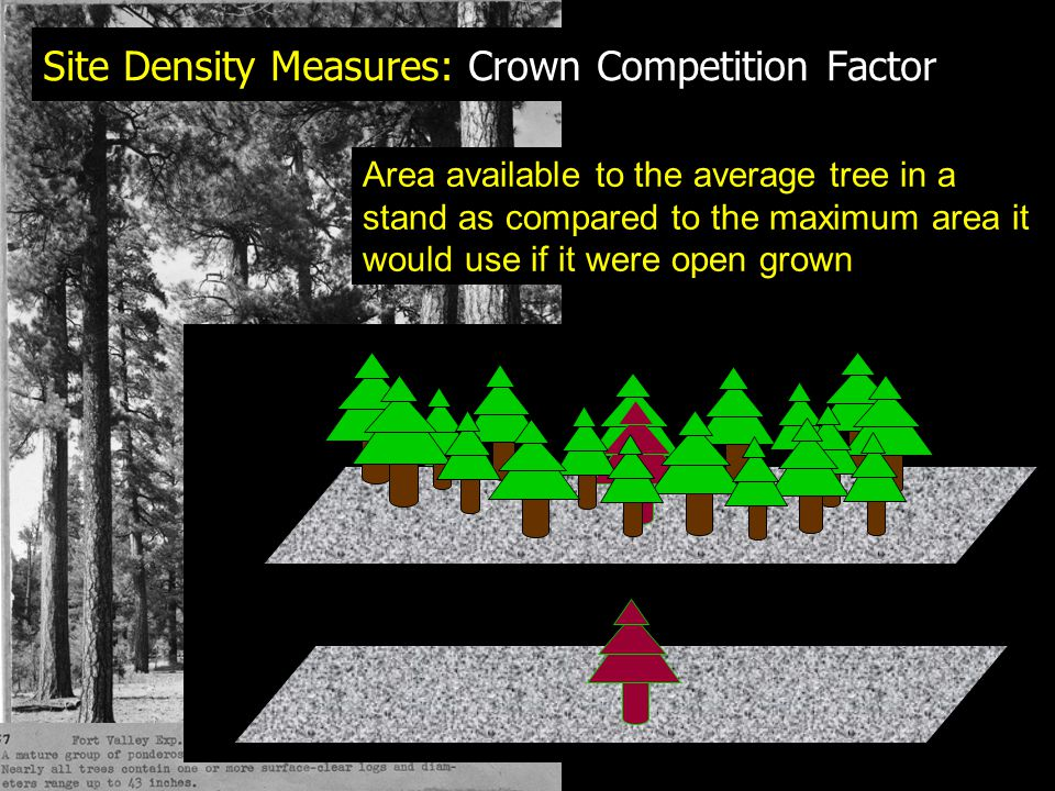 Site Density Measures: Crown Competition Factor Area available to the average tree in a stand as compared to the maximum area it would use if it were open grown