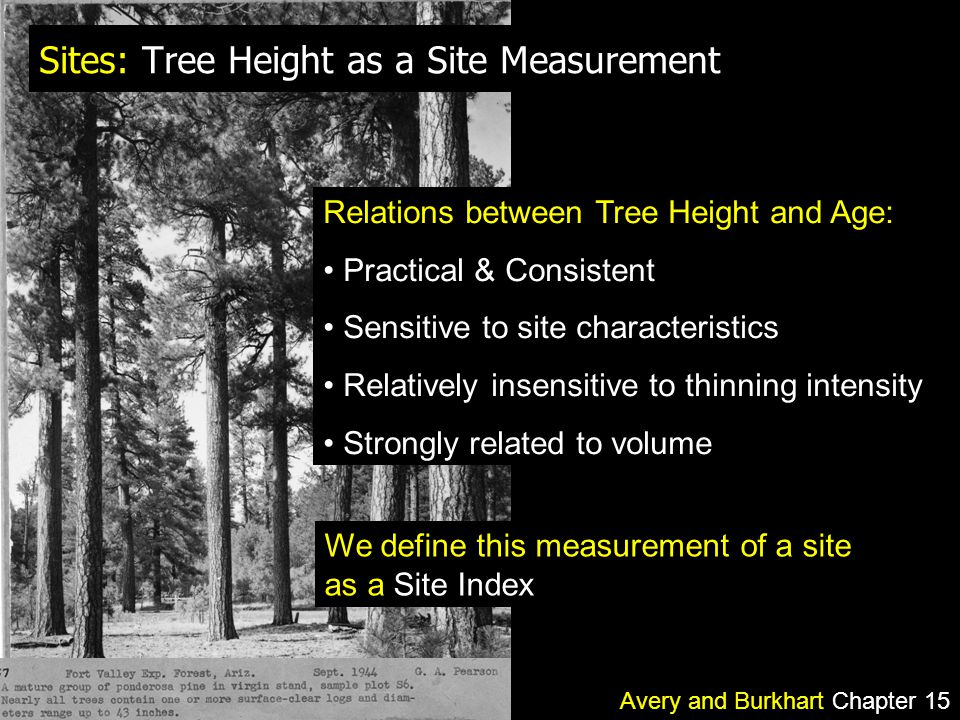 Sites: Tree Height as a Site Measurement Relations between Tree Height and Age: Practical & Consistent Sensitive to site characteristics Relatively insensitive to thinning intensity Strongly related to volume We define this measurement of a site as a Site Index Avery and Burkhart Chapter 15