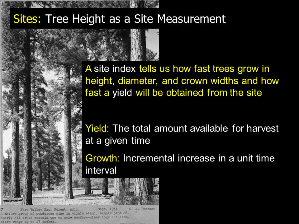 Sites: Tree Height as a Site Measurement A site index tells us how fast trees grow in height, diameter, and crown widths and how fast a yield will be obtained from the site Yield: The total amount available for harvest at a given time Growth: Incremental increase in a unit time interval