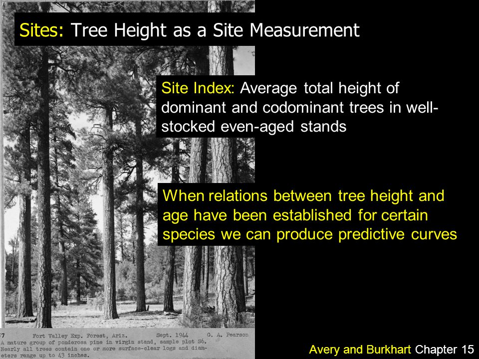 Sites: Tree Height as a Site Measurement Site Index: Average total height of dominant and codominant trees in well- stocked even-aged stands Avery and Burkhart Chapter 15 When relations between tree height and age have been established for certain species we can produce predictive curves