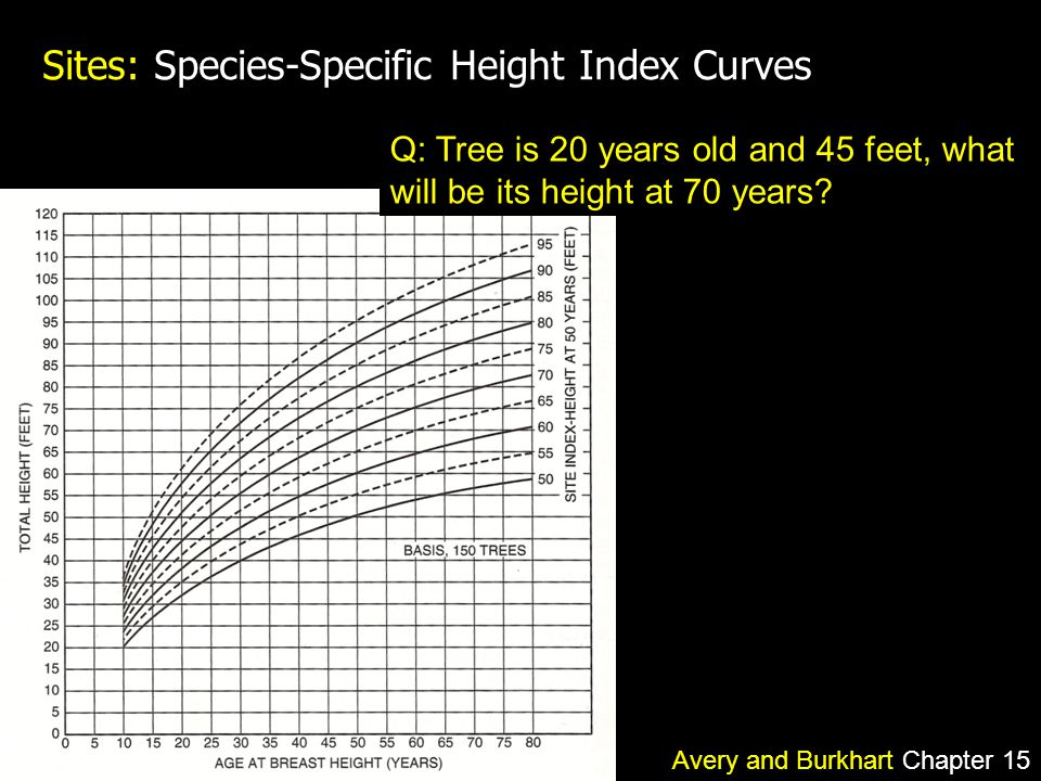 Sites: Species-Specific Height Index Curves Q: Tree is 20 years old and 45 feet, what will be its height at 70 years.
