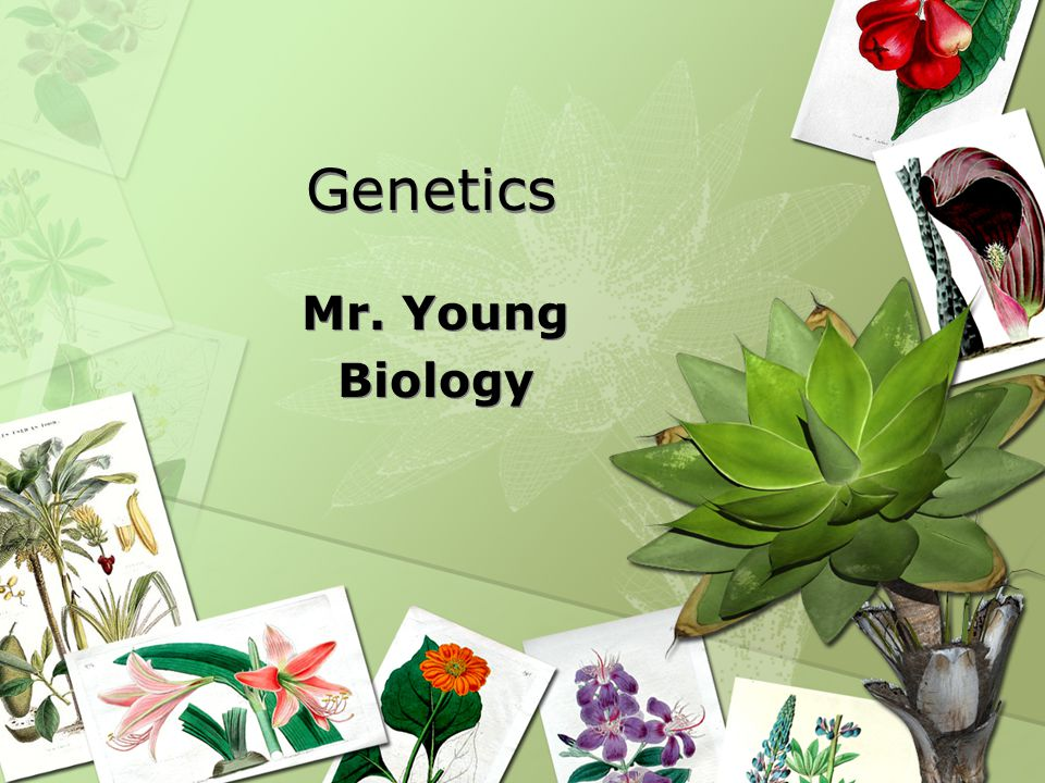 Genetics Mr. Young Biology Mr. Young Biology