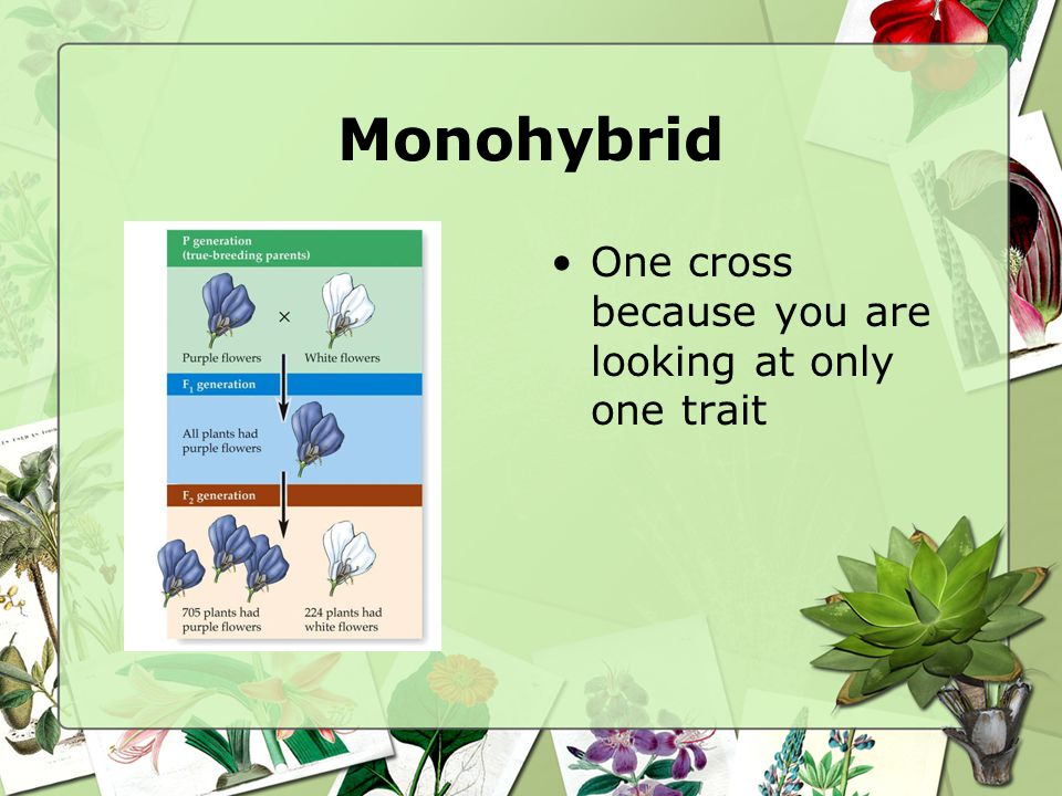 Monohybrid One cross because you are looking at only one trait