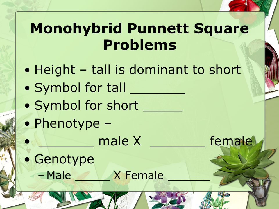 Monohybrid Punnett Square Problems Height – tall is dominant to short Symbol for tall _______ Symbol for short _____ Phenotype – _______ male X _______ female Genotype –Male _____ X Female ______