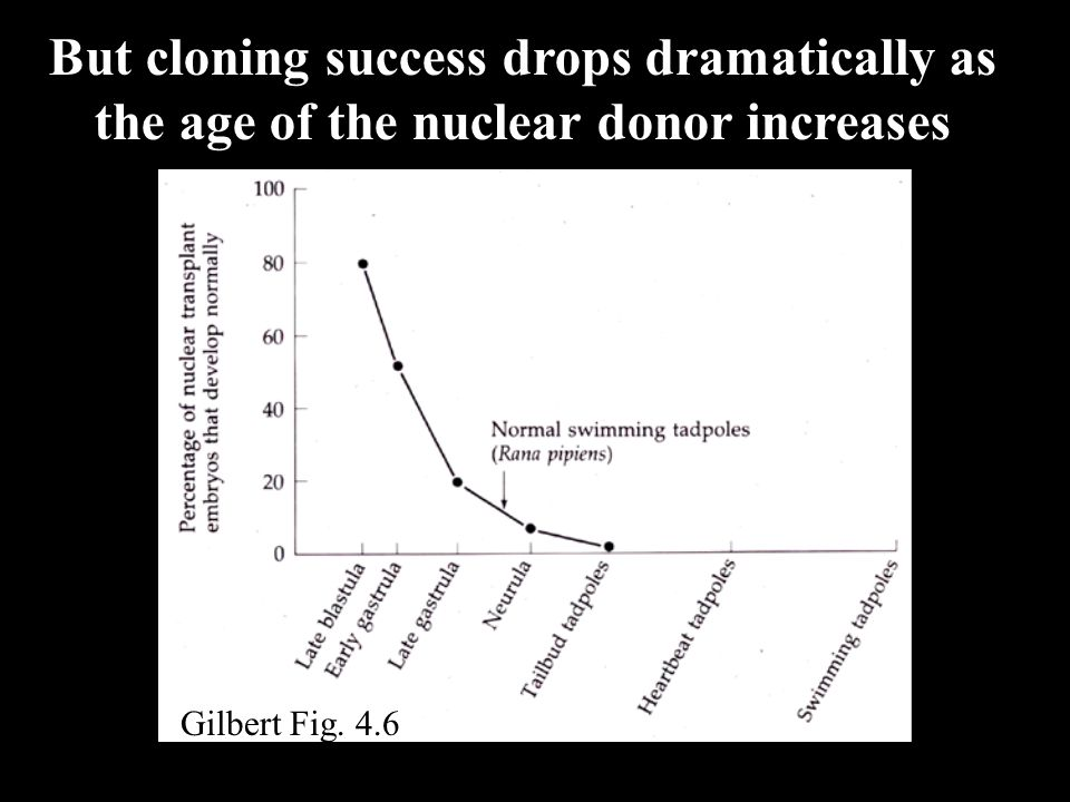 But cloning success drops dramatically as the age of the nuclear donor increases Gilbert Fig. 4.6