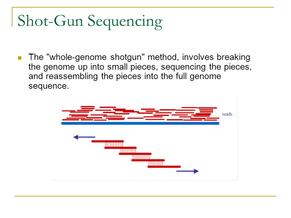 Shot-Gun Sequencing The whole-genome shotgun method, involves breaking the genome up into small pieces, sequencing the pieces, and reassembling the pieces into the full genome sequence.