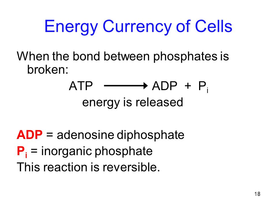 18 Energy Currency of Cells When the bond between phosphates is broken: ATP ADP + P i energy is released ADP = adenosine diphosphate P i = inorganic phosphate This reaction is reversible.