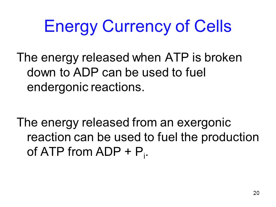20 Energy Currency of Cells The energy released when ATP is broken down to ADP can be used to fuel endergonic reactions.