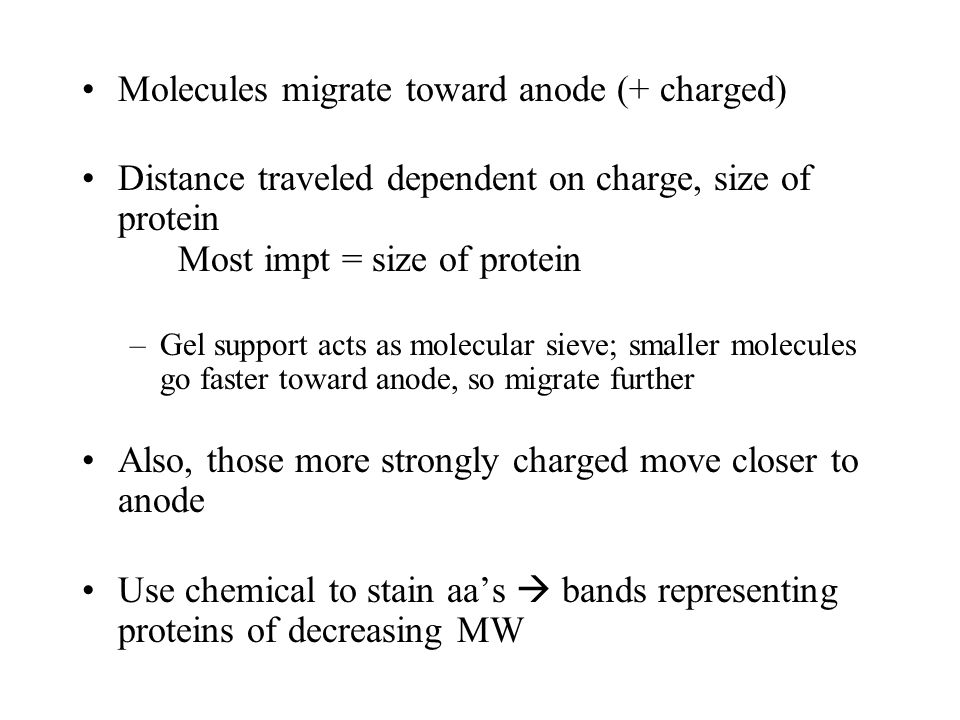 Molecules migrate toward anode (+ charged) Distance traveled dependent on charge, size of protein Most impt = size of protein –Gel support acts as molecular sieve; smaller molecules go faster toward anode, so migrate further Also, those more strongly charged move closer to anode Use chemical to stain aa's  bands representing proteins of decreasing MW