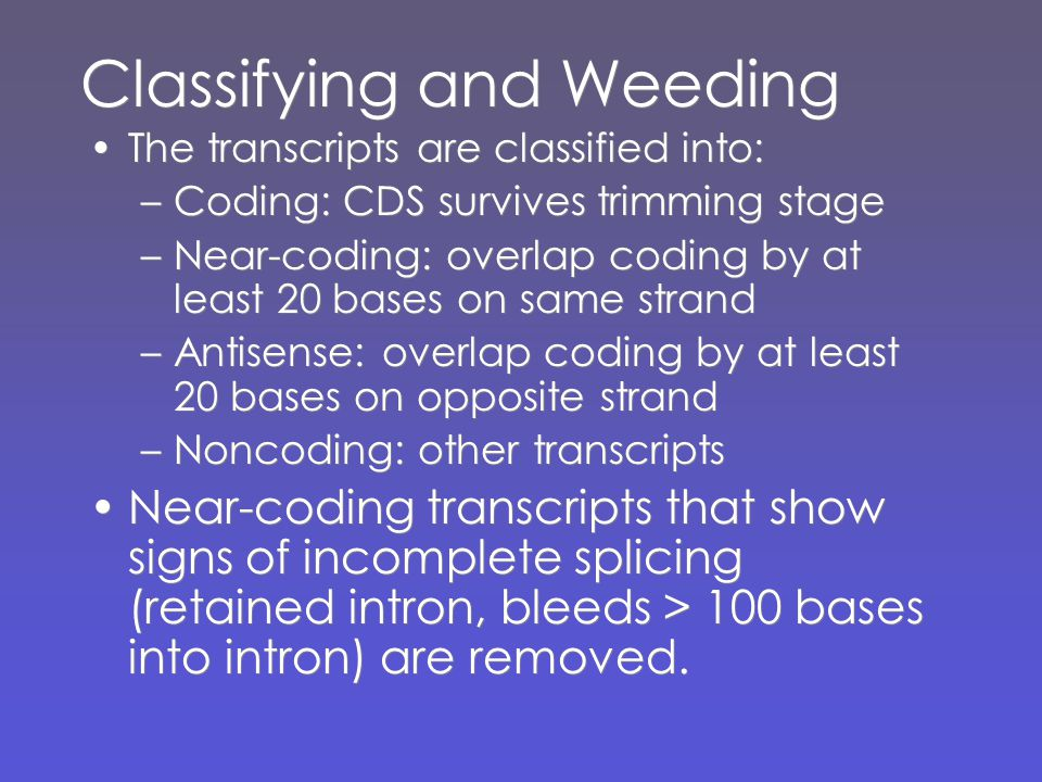 Classifying and Weeding The transcripts are classified into: –Coding: CDS survives trimming stage –Near-coding: overlap coding by at least 20 bases on same strand –Antisense: overlap coding by at least 20 bases on opposite strand –Noncoding: other transcripts Near-coding transcripts that show signs of incomplete splicing (retained intron, bleeds > 100 bases into intron) are removed.