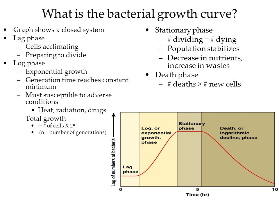 What is the bacterial growth curve.
