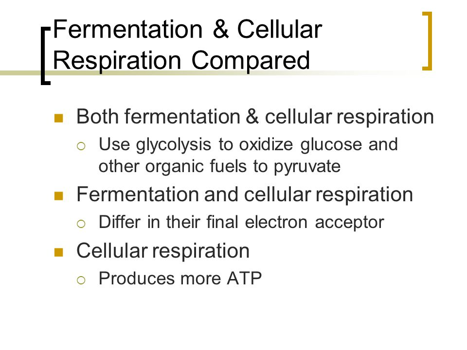 Chapter 9 Cellular Respiration: Harvesting Chemical Energy Updated ...
