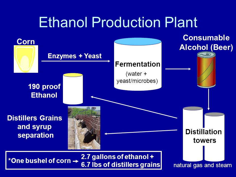 Ethanol Production Plant Fermentation Enzymes+ Yeast Consumable Alcohol (Beer) Corn Distillation towers 190 proof Ethanol Distillers Grains and syrup separation (water + yeast/microbes) natural gas and steam *One bushel of corn 2.7 gallons of ethanol lbs of distillers grains