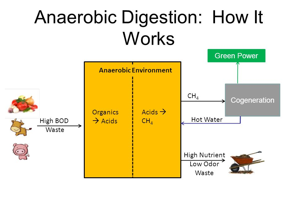 Anaerobic Digestion: How It Works High BOD Waste Organics  Acids Acids  CH 4 High Nutrient Low Odor Waste Anaerobic Environment Cogeneration Hot Water CH 4 Green Power