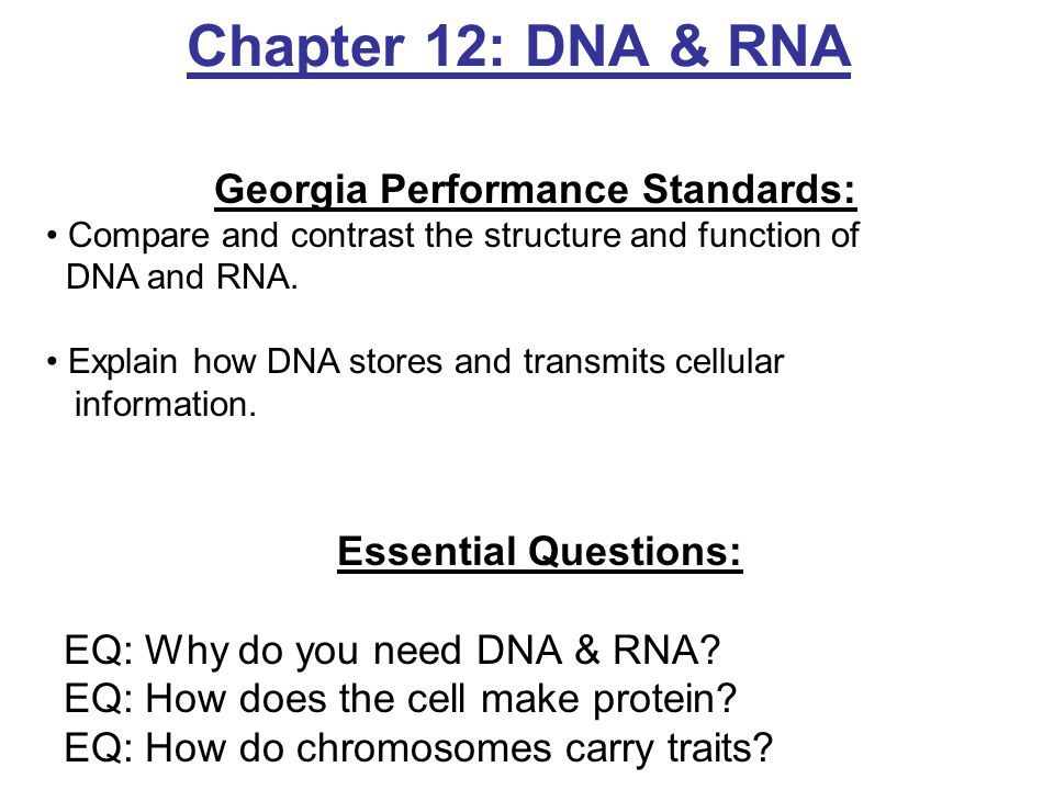 molecular genetics essay question Previous ib exam essay questions: unit 4 use these model essay question responses to prepare for essay questions on your in class tests, as well as the ib examination, paper 2.