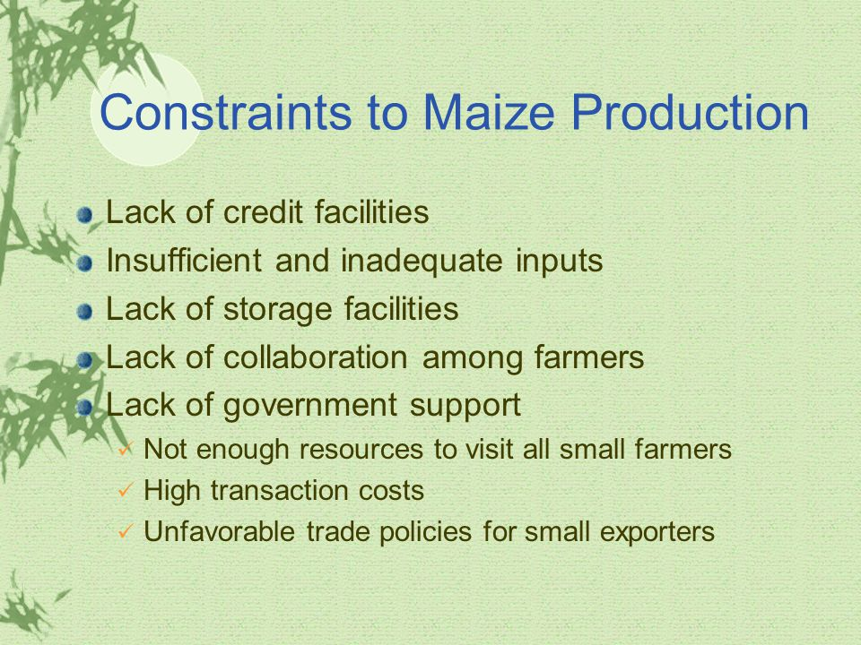 Constraints to Maize Production Lack of credit facilities Insufficient and inadequate inputs Lack of storage facilities Lack of collaboration among farmers Lack of government support Not enough resources to visit all small farmers High transaction costs Unfavorable trade policies for small exporters