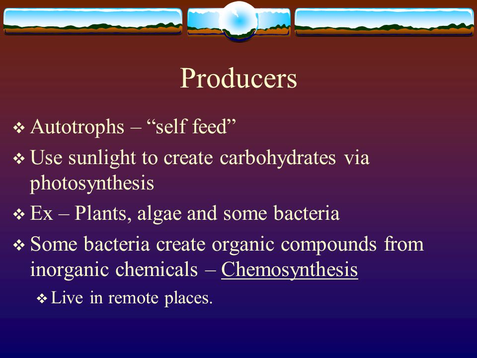 Energy Flow  Energy flows from the sun or inorganic compounds to producers.