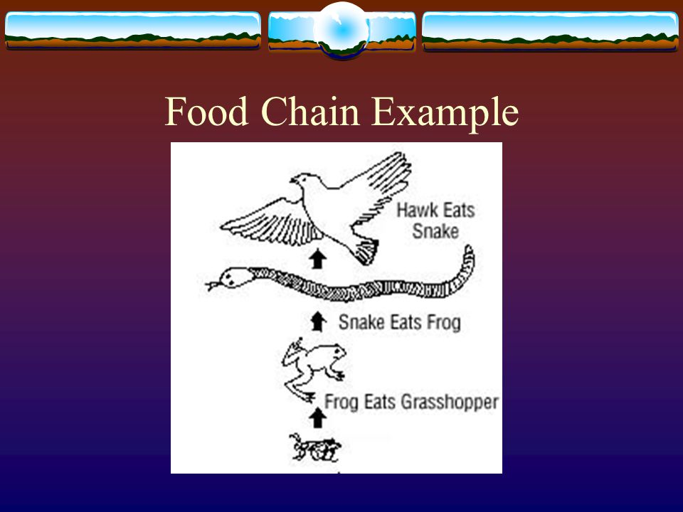 Food Chain  A series of steps in which organisms transfer energy by eating and being eaten.