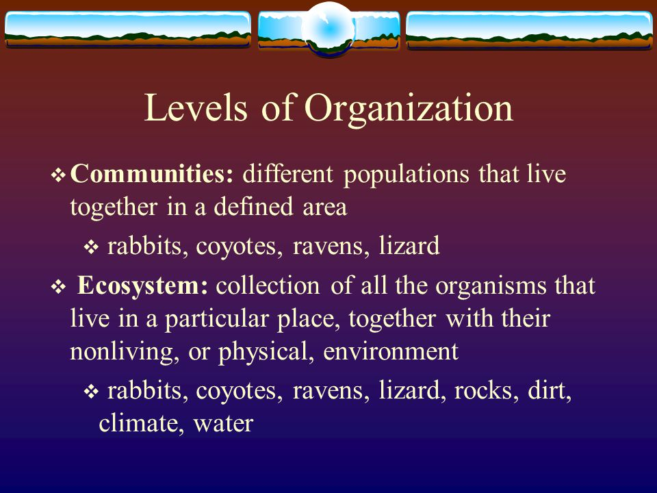 Levels of Organization  Individual: interactions between an organism and its surroundings  cottontail rabbit  Population: groups of individuals that belong to the same species and live in the same area  group of cottontail rabbits