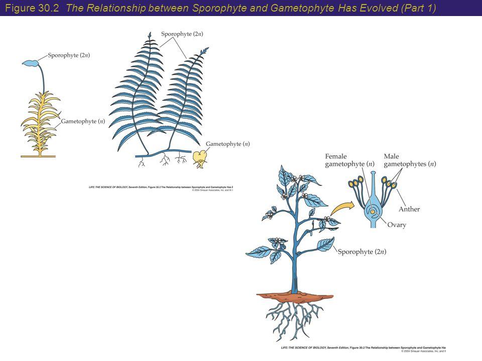 evolutionary relationships between two plants