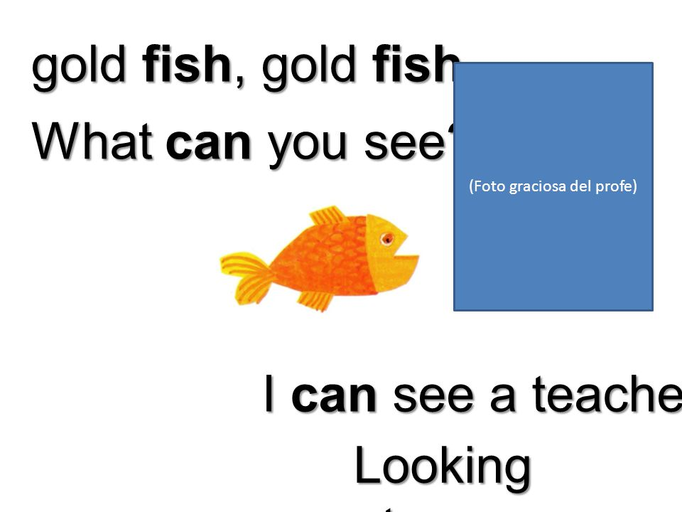 gold fish, gold fish, What can you see I can see a teacher Looking at me (Foto graciosa del profe)
