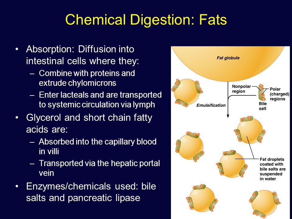 How are fats transported into the small intestinal cells?