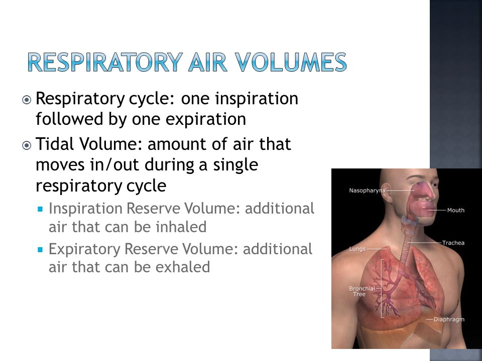  Respiratory cycle: one inspiration followed by one expiration  Tidal Volume: amount of air that moves in/out during a single respiratory cycle  Inspiration Reserve Volume: additional air that can be inhaled  Expiratory Reserve Volume: additional air that can be exhaled
