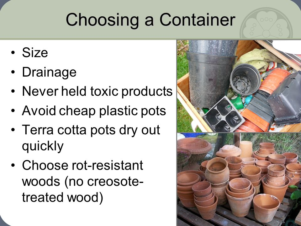 10 Choosing a Container Size Drainage Never held toxic products Avoid cheap plastic pots Terra cotta pots dry out quickly Choose rot resistant woods no