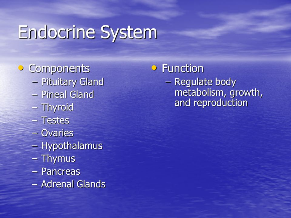 Endocrine System Components Components –Pituitary Gland –Pineal Gland –Thyroid –Testes –Ovaries –Hypothalamus –Thymus –Pancreas –Adrenal Glands Function Function –Regulate body metabolism, growth, and reproduction