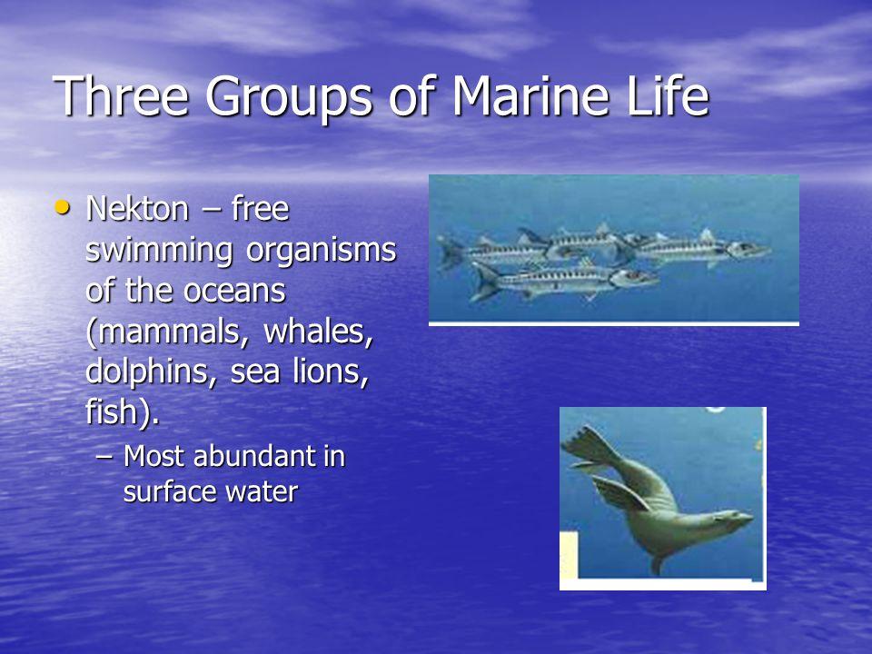 Three Groups of Marine Life Benthos – organisms that live on the ocean floor in mud, sand & rock.