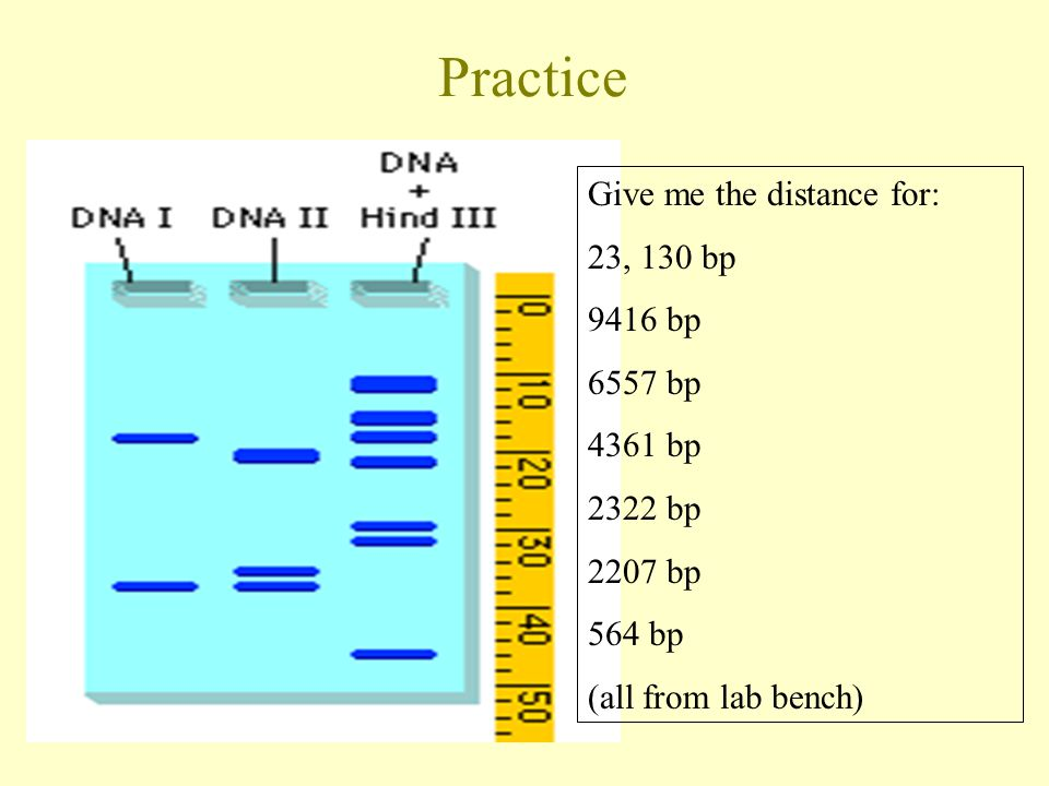Practice Give me the distance for: 23, 130 bp 9416 bp 6557 bp 4361 bp 2322 bp 2207 bp 564 bp (all from lab bench)