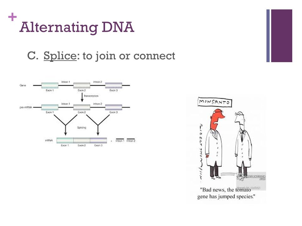 Genetic engineering biotechnology the splice of life ppt download 6 alternating dna c splice to join or connect ccuart Gallery