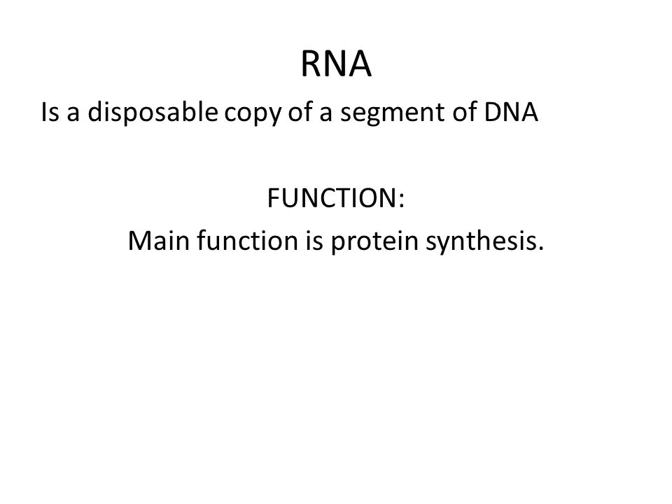 RNA Is a disposable copy of a segment of DNA FUNCTION: Main function is protein synthesis.