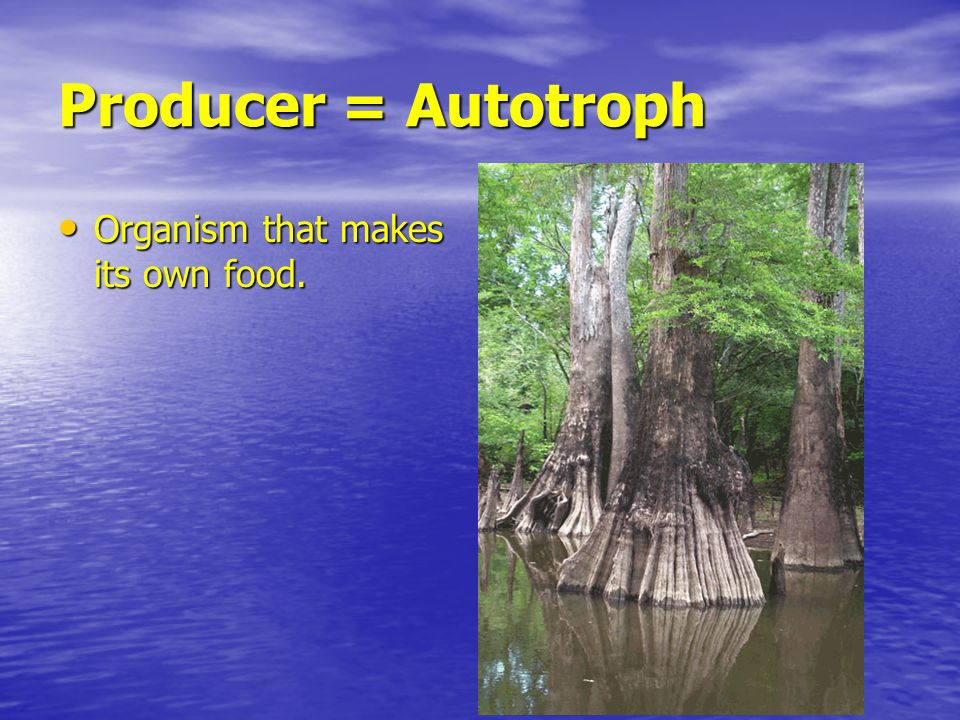 Producer = Autotroph Organism that makes its own food. Organism that makes its own food.