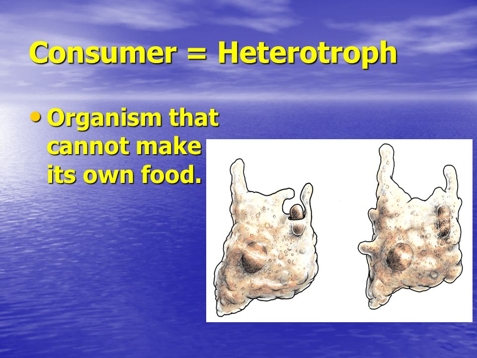 Consumer = Heterotroph Organism that cannot make its own food.