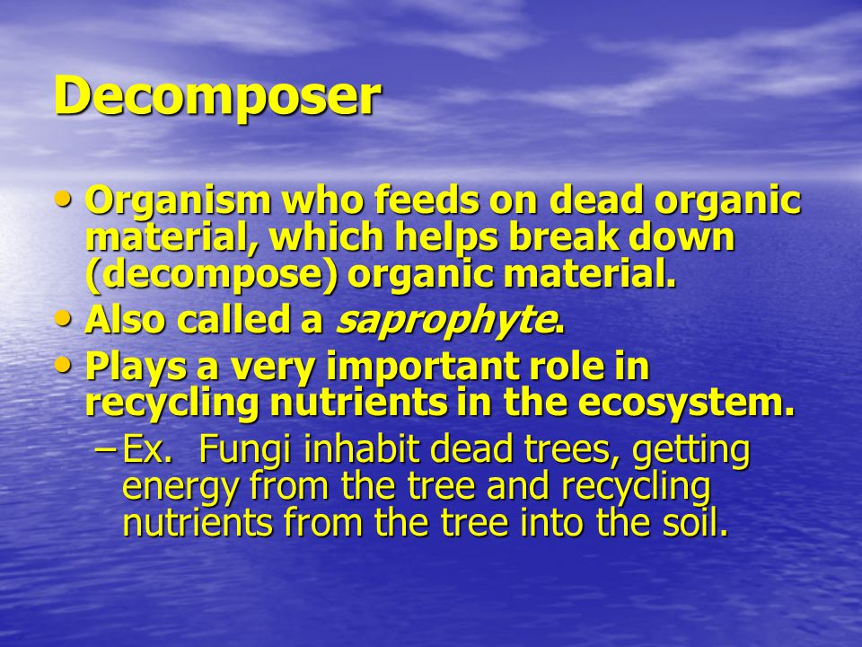 Decomposer Organism who feeds on dead organic material, which helps break down (decompose) organic material.