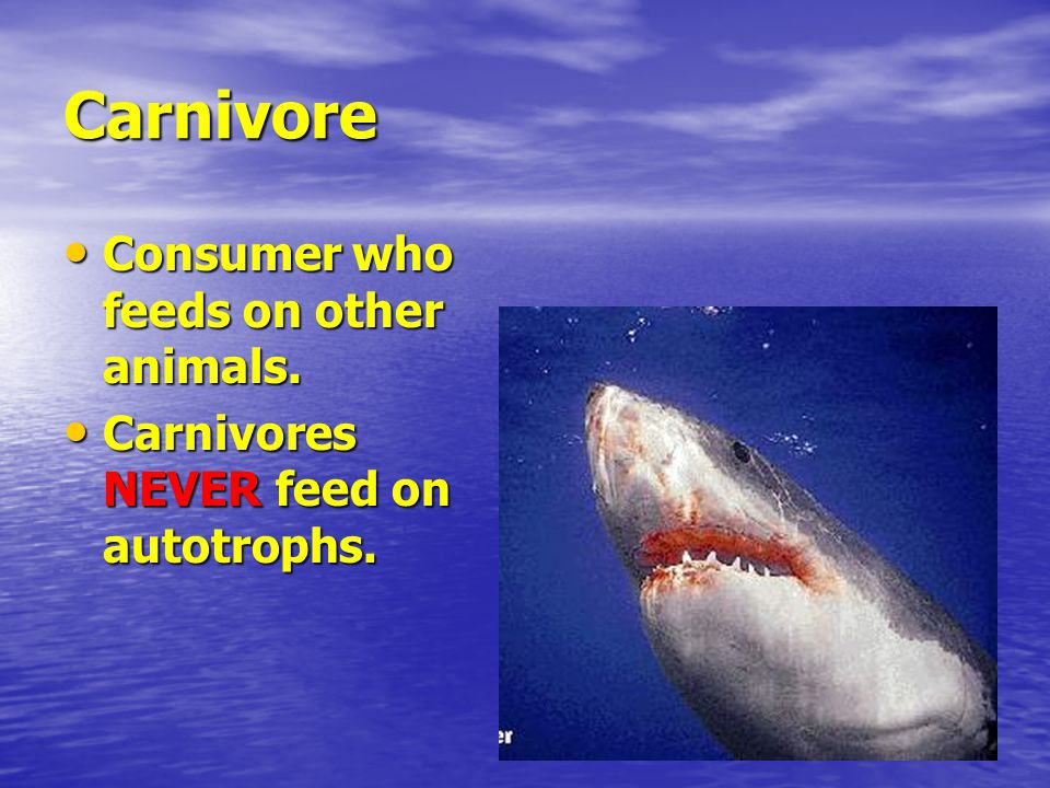 Carnivore Consumer who feeds on other animals. Consumer who feeds on other animals.