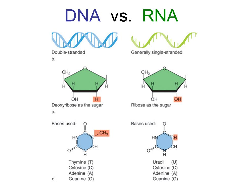 Science Lesson: DNA (Part 3, How Does the Cell Get Information Out ...