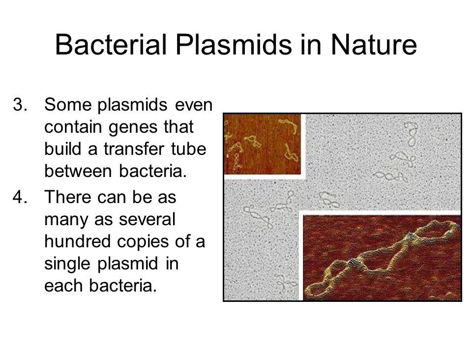 Bacterial Plasmids in Nature 3.Some plasmids even contain genes that build a transfer tube between bacteria.