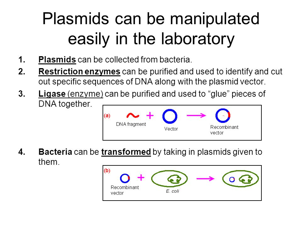 Plasmids can be manipulated easily in the laboratory 1.Plasmids can be collected from bacteria.