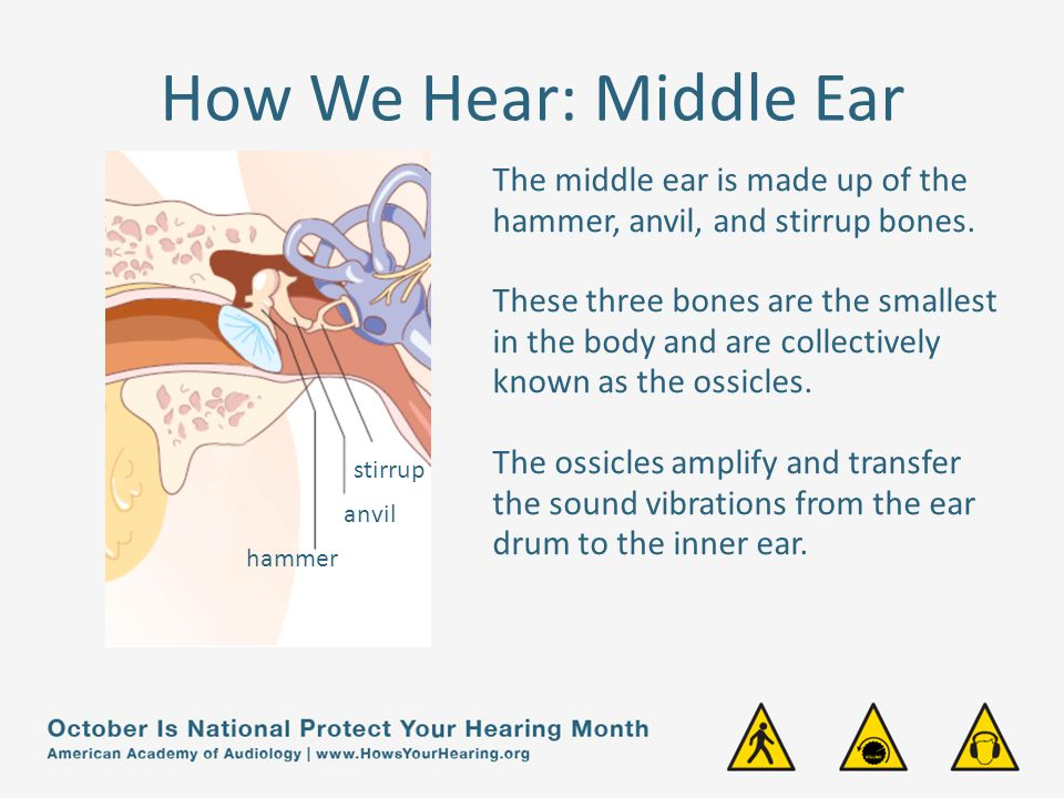 How We Hear: Middle Ear The middle ear is made up of the hammer, anvil, and stirrup bones.